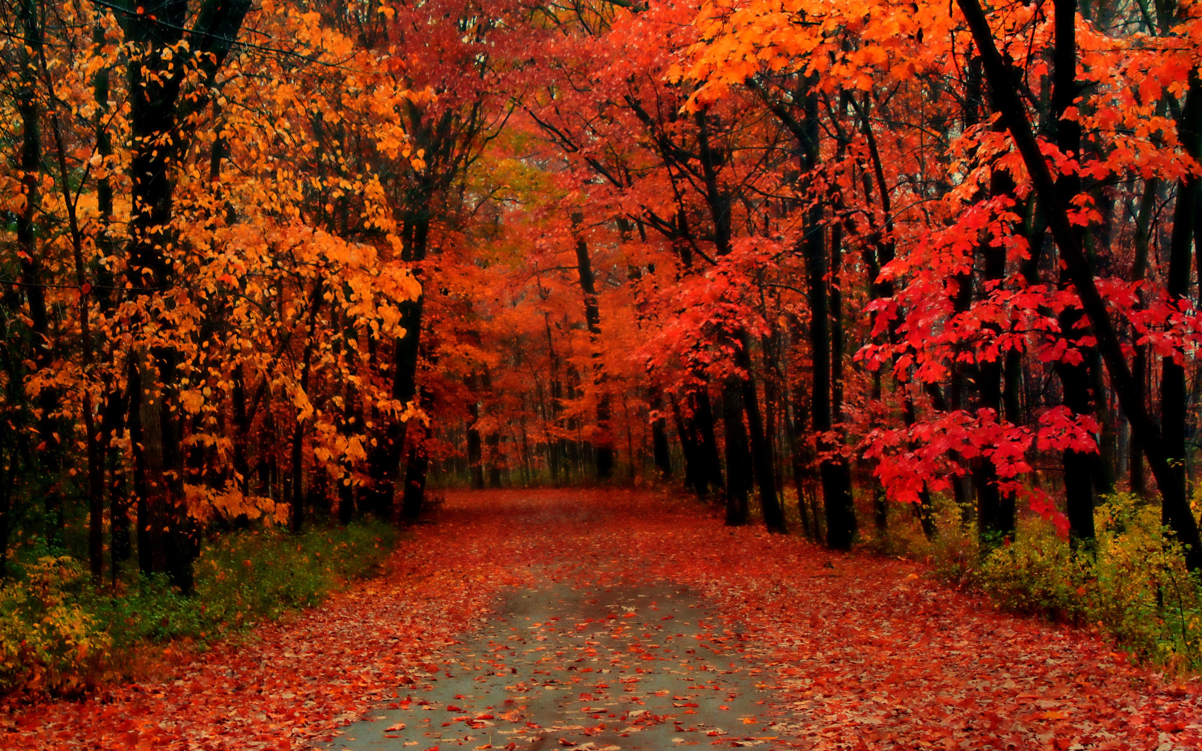 Validation/WinterFall/autumn10.jpg