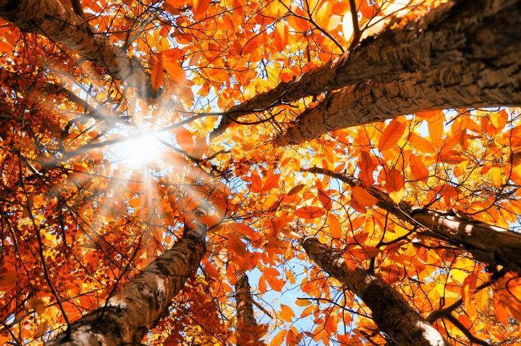 Validation/WinterFall/autumn2.jpg
