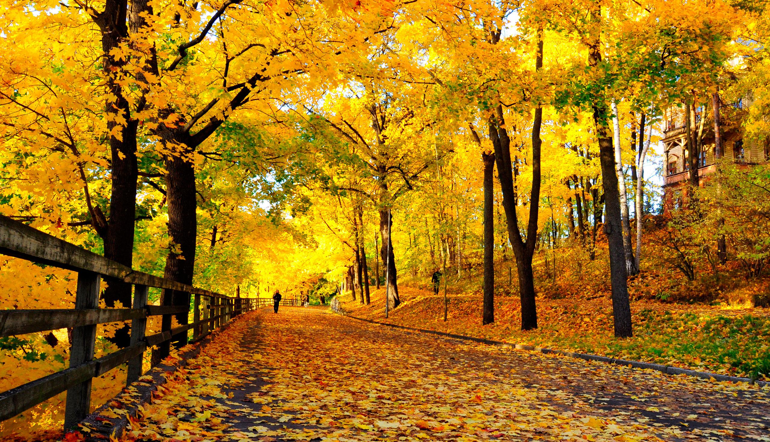 Validation/WinterFall/autumn3.jpg