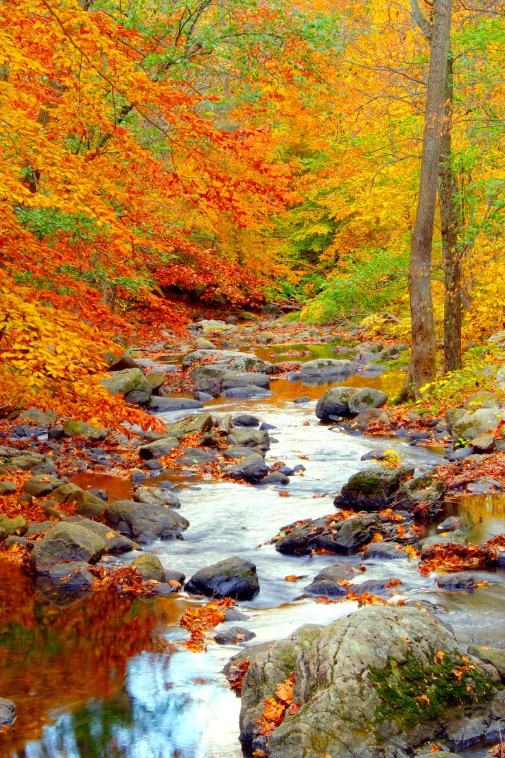 Validation/WinterFall/autumn4.jpg