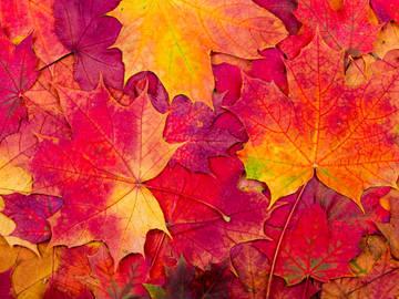 Validation/WinterFall/autumn9.jpg