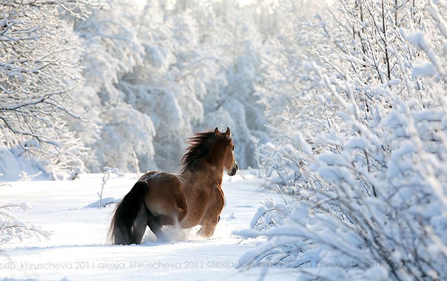 Validation/WinterFall/winter9.jpg